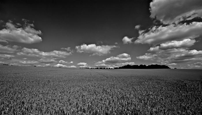 Loompits fields